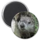 Groundhog Day 6 Cm Round Magnet