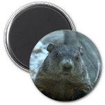 Groundhog Day! 6 Cm Round Magnet