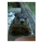 Groundhog Day! Cards