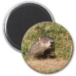 Groundhog Fridge Magnet