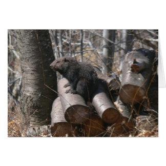 Groundhog on Woodpile Card
