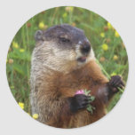 Groundhog Pose Sticker - Closer Sticker