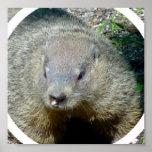 Groundhog Poster Print