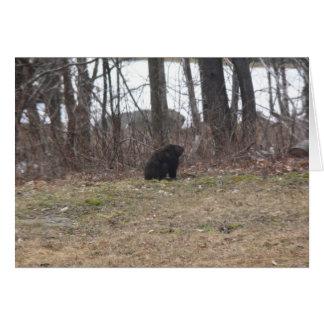 Groundhog Surveys the Scene Card