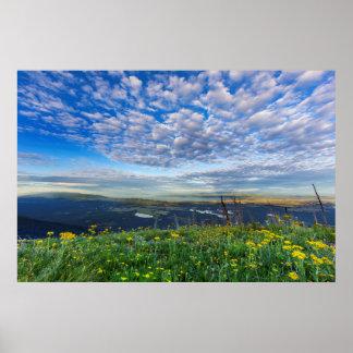 Groundsel Wildflowers in the Swan Range Poster