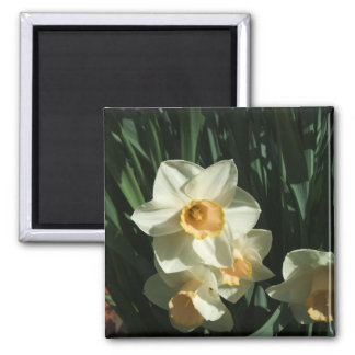 group1 054 Narcissus Square Magnet
