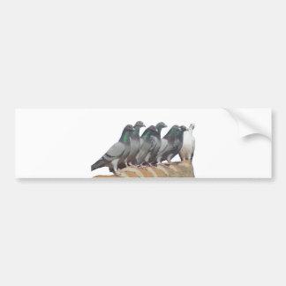 Group of carrier pigeons bumper sticker