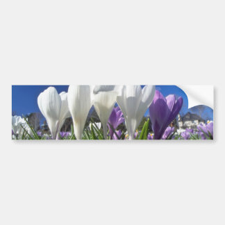 Group of crocuses flowers bumper stickers