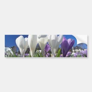 Group of crocuses flowers car bumper sticker