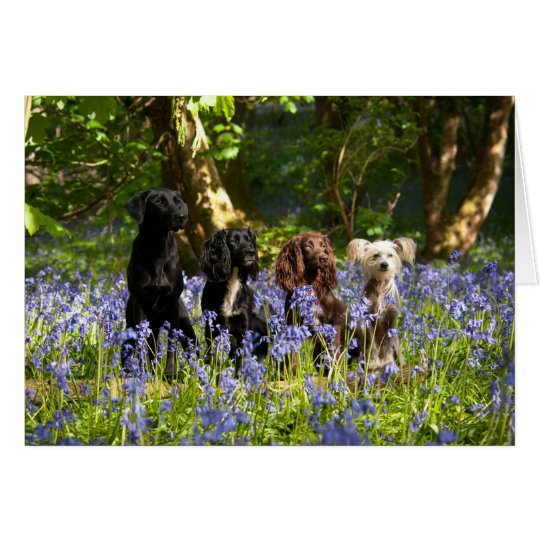 Group of Dogs Greeting Card