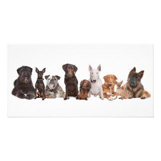 Group of Dogs Photo Card Template