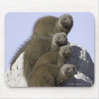 Group of Dwarf Mongoose on a Termite Mound in Mouse Pad