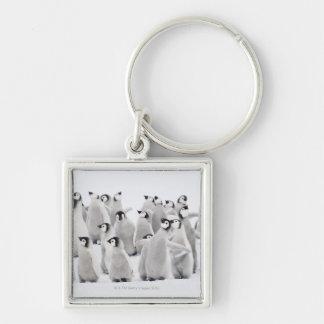 Group of Emperor penguins (Aptenodytes forsteri) Key Ring