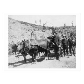 Group of Gold Prospectors Photograph Postcard