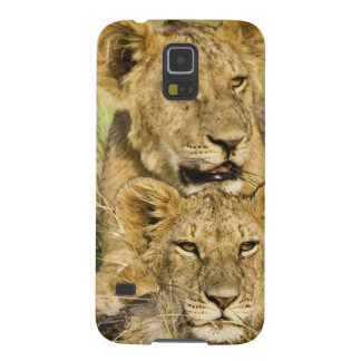 Group of lion cubs, Panthera leo, Masai Mara, Case For Galaxy S5