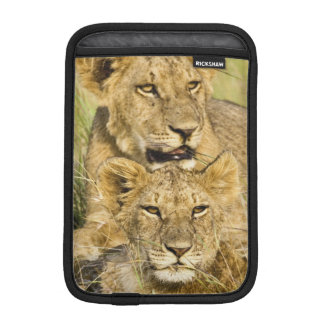 Group of lion cubs, Panthera leo, Masai Mara, iPad Mini Sleeve