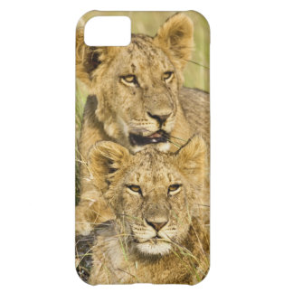 Group of lion cubs, Panthera leo, Masai Mara, iPhone 5C Case