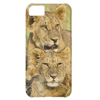 Group of lion cubs, Panthera leo, Masai Mara, iPhone 5C Case