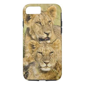 Group of lion cubs, Panthera leo, Masai Mara, iPhone 8/7 Case