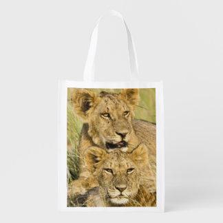 Group of lion cubs, Panthera leo, Masai Mara, Reusable Grocery Bag