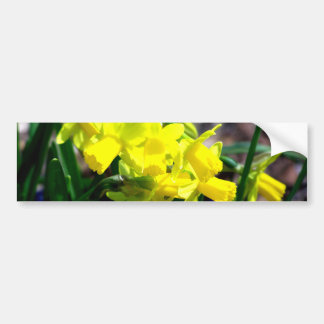 Group of Little Yellow Daffodils Bumper Stickers