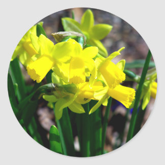 Group of Little Yellow Daffodils Round Sticker
