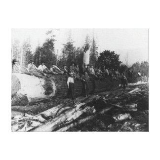 Group of Lumberjacks on Large Log Photograph Canvas Print