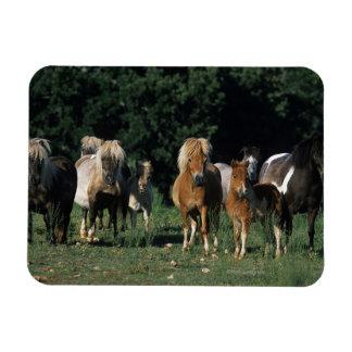 Group of Miniature Foals Rectangular Photo Magnet