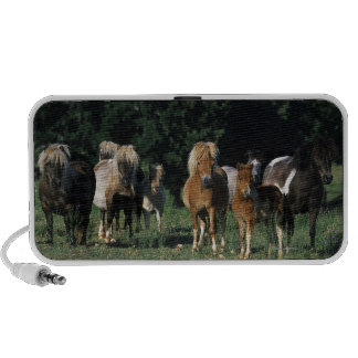 Group of Miniature Foals iPod Speakers