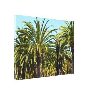 Group of Palm Trees In Bright Sunshine Stretched Canvas Print