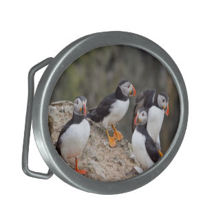 Group of Puffins Buckle Belt Buckle