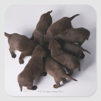 Group of puppies with heads together square sticker