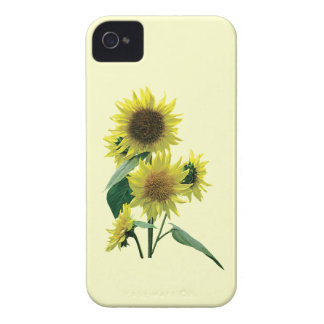 Group of Sunflowers iPhone 4 Cases