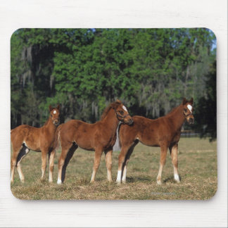 Group of Thoroughbred Foals Mouse Mat