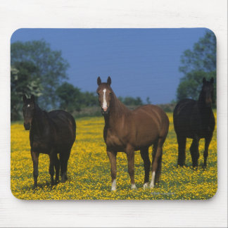 Group of Thoroughbred Horses Mouse Mat