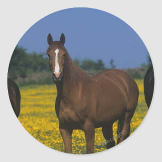 Group of Thoroughbred Horses Round Sticker