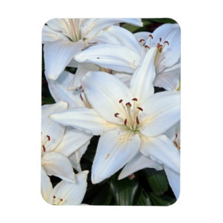 Group of White Lilies Rectangular Photo Magnet
