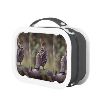 grouse yubo lunch boxes