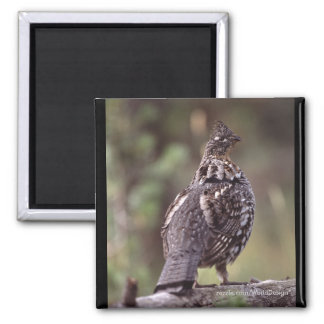 Grouse Square Magnet