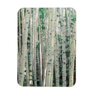 Grove of Colorado Aspen Trees - Magnet