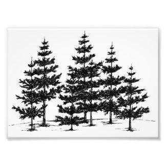 Grove of Pine Tree Art Cabin RV Camping Photo Print