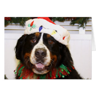 Grover - Bernese Mountain Dog Card