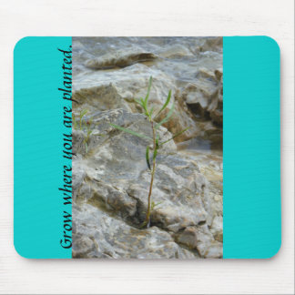 Grow where you are planted mousepad