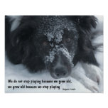 Growing Old Quote Border Collie Face Poster