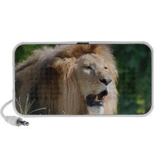 Growling Lion Speakers