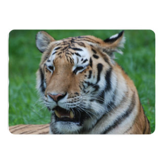 "Growling Tiger 5"" X 7"" Invitation Card"