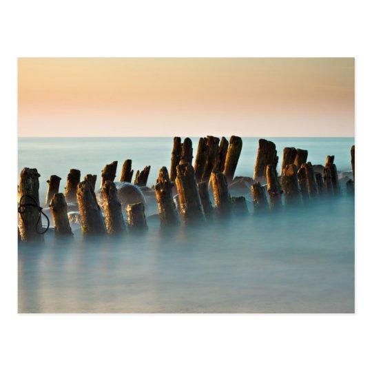 Groynes on the Baltic Sea coast Postcard