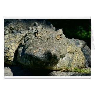 grrr gator chomp greeting card