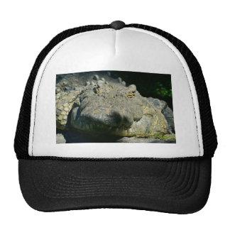 grrr gator chomp mesh hat