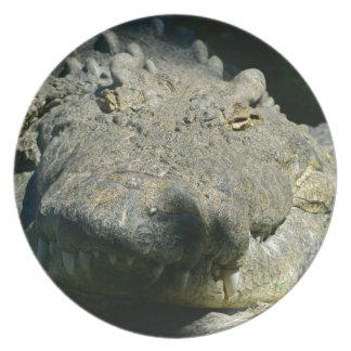 grrr gator chomp dinner plate